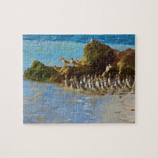 Shore Birds at the Ocean on a Puzzle