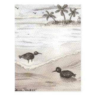 Shore Birds Postcard