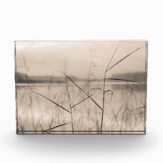 Shore reeds award