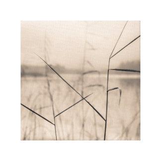 Shore reeds canvas print