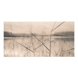 Shore reeds card