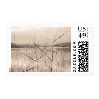 Shore reeds postage stamp