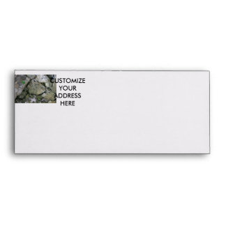 Shore rocks, jagged, with small green shoot envelope