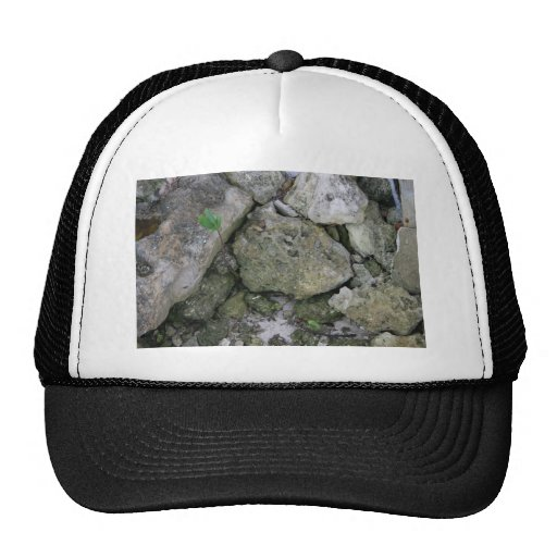 Shore rocks, jagged, with small green shoot hat
