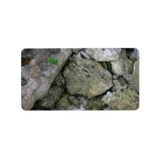 Shore rocks, jagged, with small green shoot address label