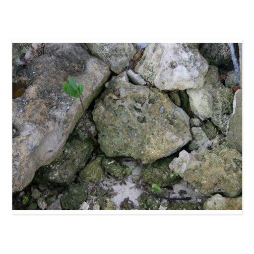 Shore rocks, jagged, with small green shoot postcard