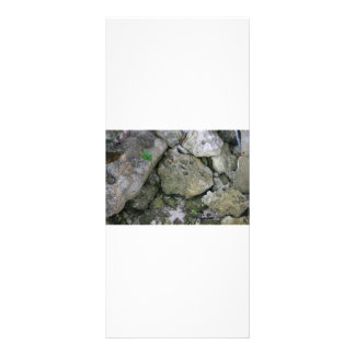 Shore rocks, jagged, with small green shoot rack card