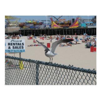 Shore Thing Postcard