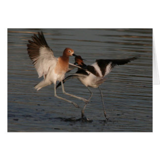 Shorebird Birds Wildlife Animals Avocets Godwits Card