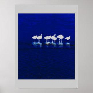 Shorebird Birds Wildlife Animals Avocets Godwits Poster