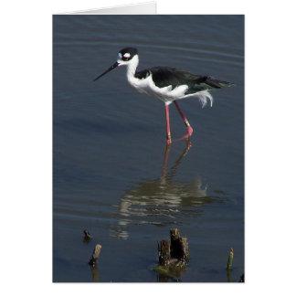 Shorebird Birds Wildlife Animals Beach Ocean Card
