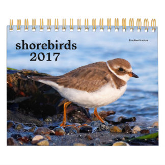 Shorebirds 2017 calendar