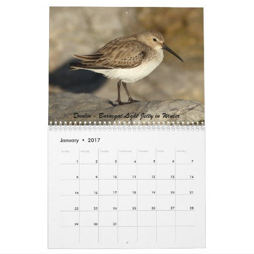 Shorebirds of New Jersey Calendar