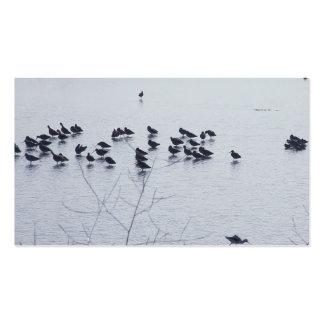 shorebirds on a lake business card