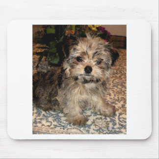 Shorkie Puppy Mouse Pad