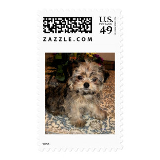 Shorkie Puppy Stamps
