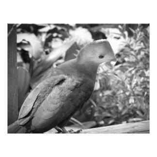 short beaked bird head turned bw custom flyer