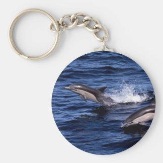 Short-beaked common dolphin key chains