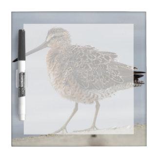 Short-billed Dowitcher Dry-Erase Board