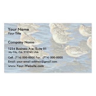 Short-billed Dowitcher Flock at Shoreline Business Card Templates