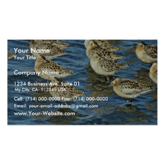 Short-billed Dowitcher Flock at Shoreline Business Card Template