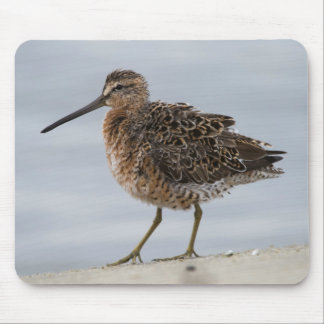 Short-billed Dowitcher Mouse Pad