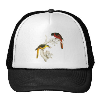 Short-billed Minivet Mesh Hats