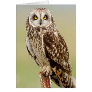 Short Eared Owl At Ninepipe Wma Near Ronan Greeting Card