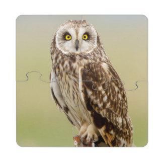 Short Eared Owl At Ninepipe Wma Near Ronan Puzzle Coaster
