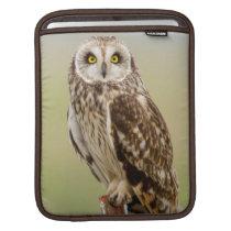 Short Eared Owl At Ninepipe Wma Near Ronan Sleeve For iPads