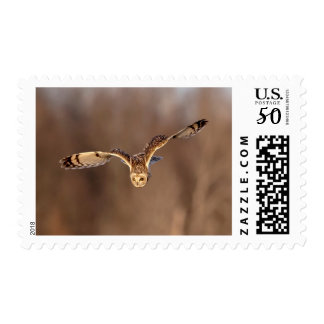 Short-eared owl diving towards the ground postage