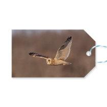 Short-eared owl in flight gift tags