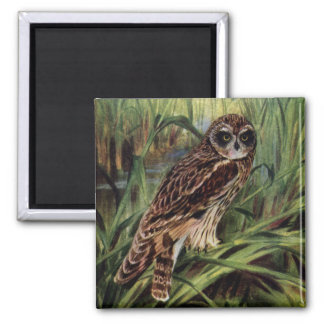 Short-eared Owl in Wetlands 2 Inch Square Magnet
