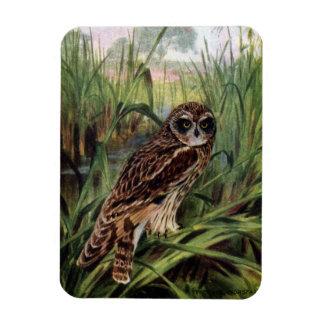 Short-eared Owl in Wetlands Magnet