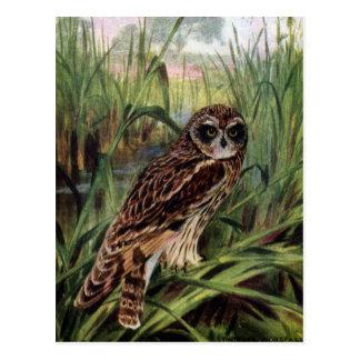 Short-eared Owl in Wetlands Postcard