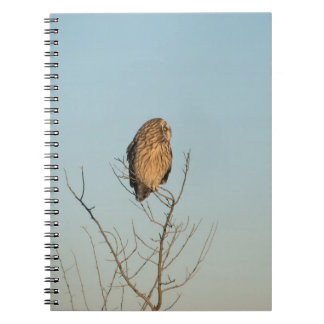 Short Eared Owl Spiral Notebooks