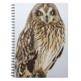 Short-eared Owl on fence post Note Books