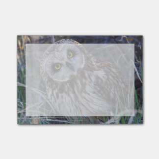 Short-eared Owl Post-it® Notes
