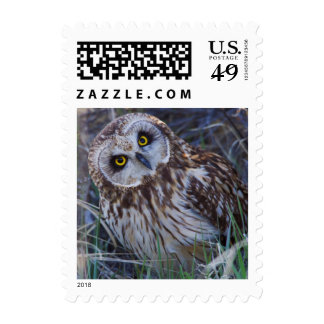 Short-eared Owl Postage Stamp