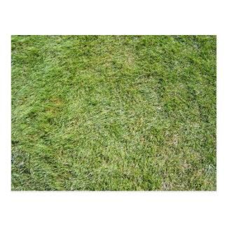 Short Fresh green grass texture Postcard