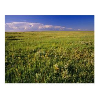 Short Grass Prairie in remote northeastern Postcard