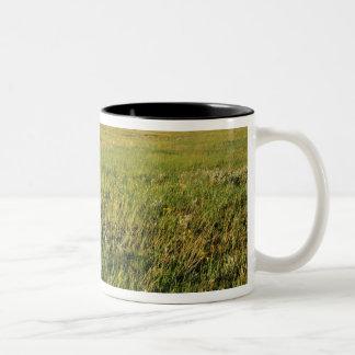 Short Grass Prairie in remote northeastern Two-Tone Coffee Mug