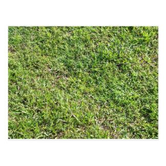 Short green grass postcard