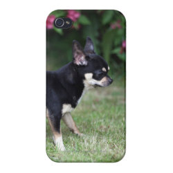 Case Savvy iPhone 4 Matte Finish Case with Chihuahua Phone Cases design
