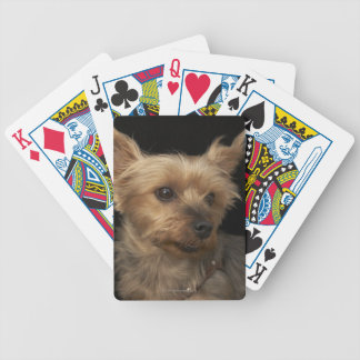 Short haired Yorkie dog looking to the right Bicycle Playing Cards