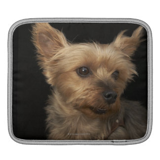 Short haired Yorkie dog looking to the right iPad Sleeve