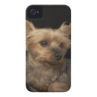Short haired Yorkie dog looking to the right iPhone 4 Cover