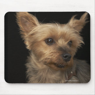 Short haired Yorkie dog looking to the right Mouse Pad