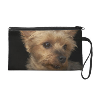 Short haired Yorkie dog looking to the right Wristlet