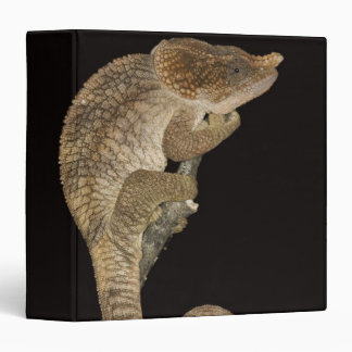 Short-horned chameleon(Calumma brevicornis) 3 Ring Binder
